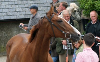 Mixed fortunes and Wincanton runners